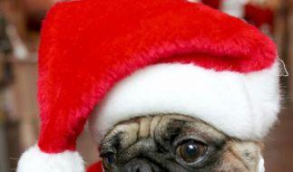 Weihnachtsplätzchen für den Hundegaumen (Foto)