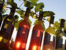 Wein (Foto)
