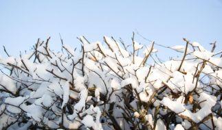 Wer seine Hecke loswerden möchte, muss sich beeilen. Ab dem 1. März ist etwa das Roden von Sträuchern und Hecken verboten. (Foto)
