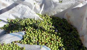 Wie die «Agro-Mafia» Milliarden verdient (Foto)