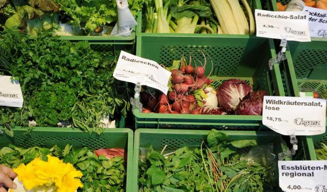 Wiesenkraut Sauerampfer als Gemüsebeilage zu Geflügel (Foto)
