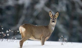 Wildtiere im Wald nicht füttern (Foto)