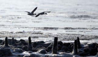 Winterwetter macht Voegeln zu schaffen (Foto)
