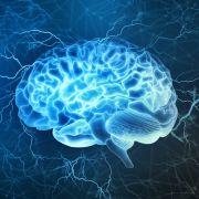 Wissenschaftler entwickelten ein Implantat, um die Hirnleistung zu steigern. (Foto)