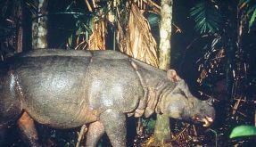 WWF: Artensterben geht ungebremst weiter (Foto)