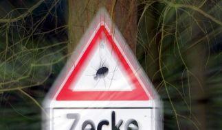 Zeckenzeit (Foto)