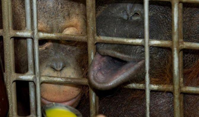 Zoobewohner mit Schniefnasen (Foto)