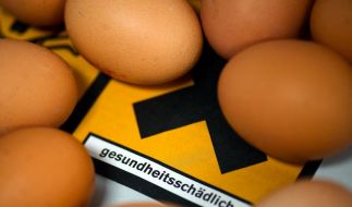 Zu viel Dioxin in Hühnern (Foto)