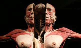 Zwischen Ekel und Faszination: «Körperwelten» zog bereits Millionen von Besuchern weltweit an. (Foto)