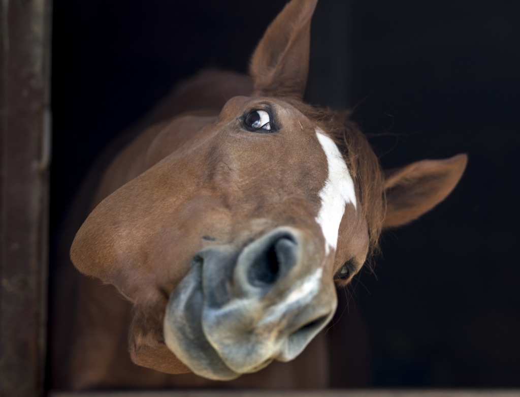 mensch und pferd sex