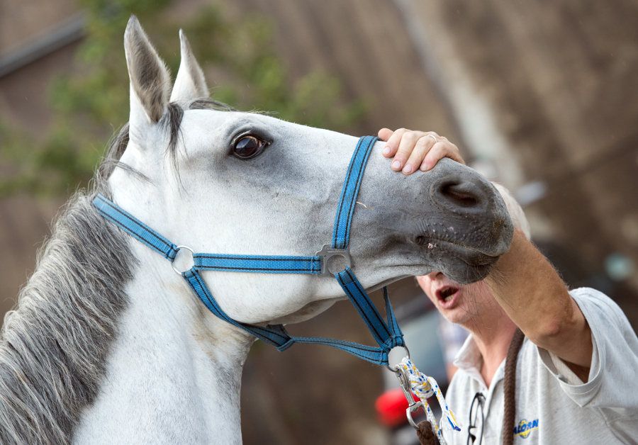 Sodomie-Skandal in London: Tierarzt gesteht Sex mit Pferd