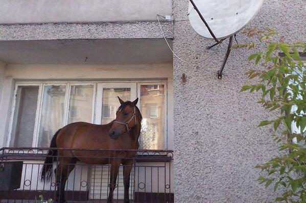 tabuthema erregte pferd arbeit