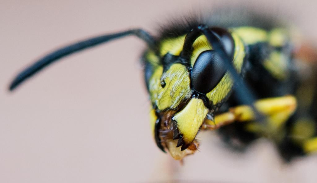 Rote Liste: 10.000 Euro Bußgeld! DIESE Insekten zu töten, ist ...