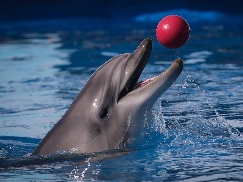 panorama delfin tierforscherin howe erlebt liebes sessions peter