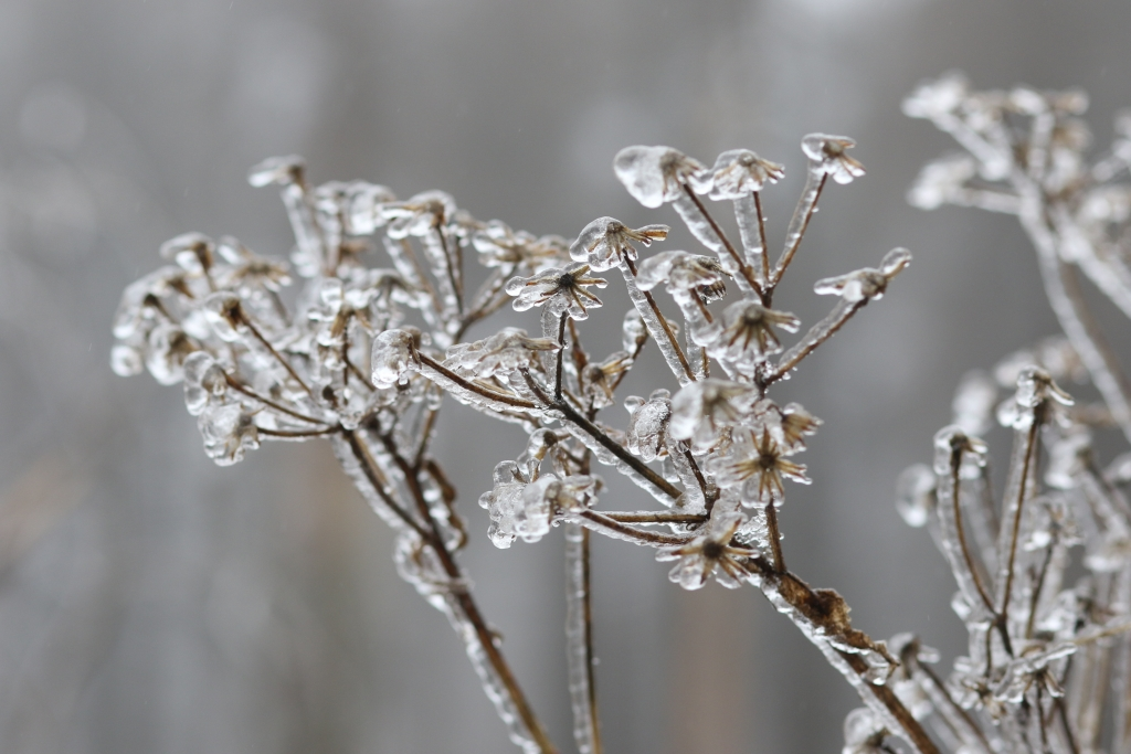 Schneeprognose Weihnachten 2019.Winter Wetter 2018 19 Deutschland Aktuell Bekommen Wir In