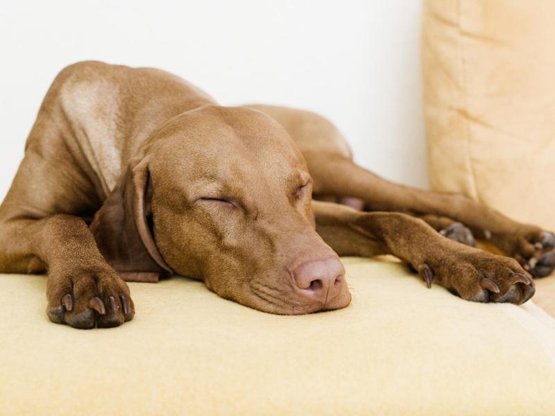 hundehaltung in mietwohnung urteil vermieter darf. Black Bedroom Furniture Sets. Home Design Ideas