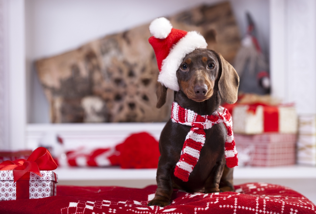 Tiere als Weihnachtsgeschenke: Umtausch ausgeschlossen! Vierbeiner ...