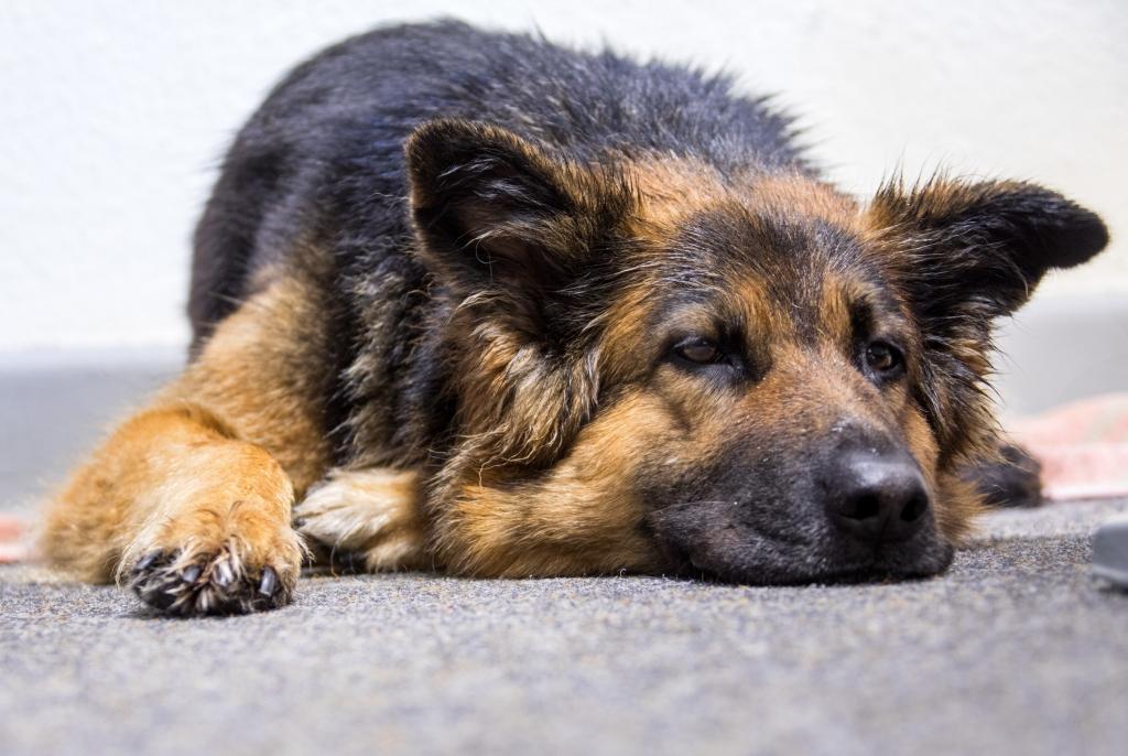Tier-Nachrichten aus aller Welt: So richtig KUHHH-L! Polizei weckt ...