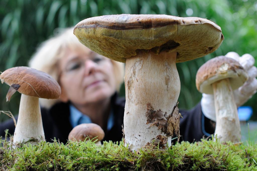 Pilze Selbst Zuchten Pilz Plantage Im Eigenen Garten News De