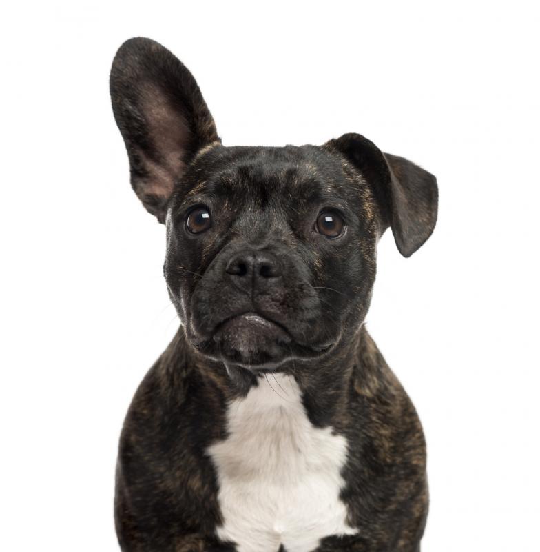 hayley cowan 22 j hrige ermordet hund mit klebeband und leine. Black Bedroom Furniture Sets. Home Design Ideas