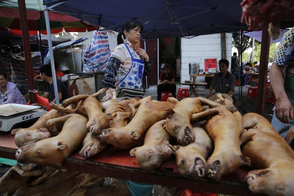 Yulin Schlachtfest 2018 So Widerwärtig Ist Das Hunde Schlachtfest