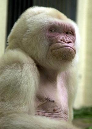 Die hässlichsten Tiere