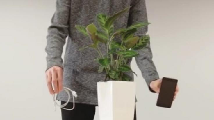 Bioo Lite erzeugt Strom aus Fotosynthese. (Foto)