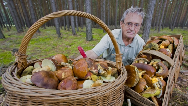 Der Ausflug in den Wald hat sich für diesen Pilzfreund gelohnt. (Foto)