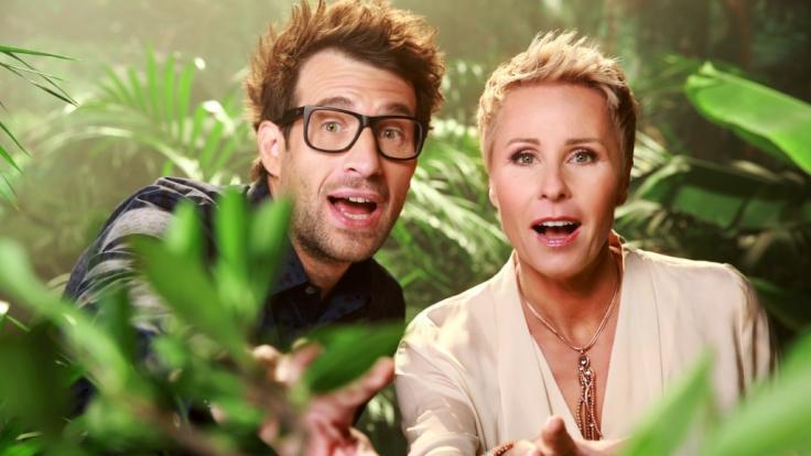 """Die neue Staffel vom Dschungelcamp steht in den Startlöchern - ich 2019 werden Daniel Hartwich und Sonja Zietlow """"Ich bin ein Star - Holt mich hier raus!"""" moderieren. (Foto)"""