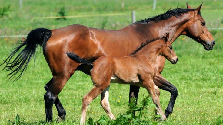 Tierquäler haben sich an Pferden in Thüringen vergangen.