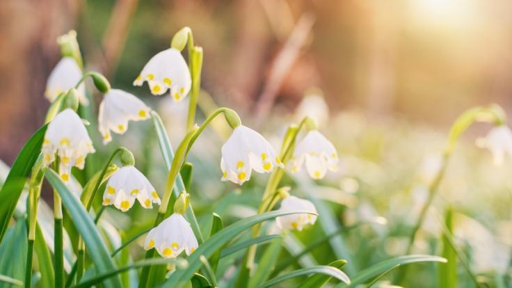 Es wird endlich Frühling in Deutschland. (Foto)