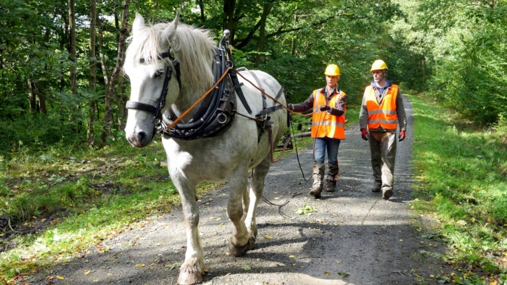 Judith Rakers: Abenteuer Pferd bei 3sat (Foto)