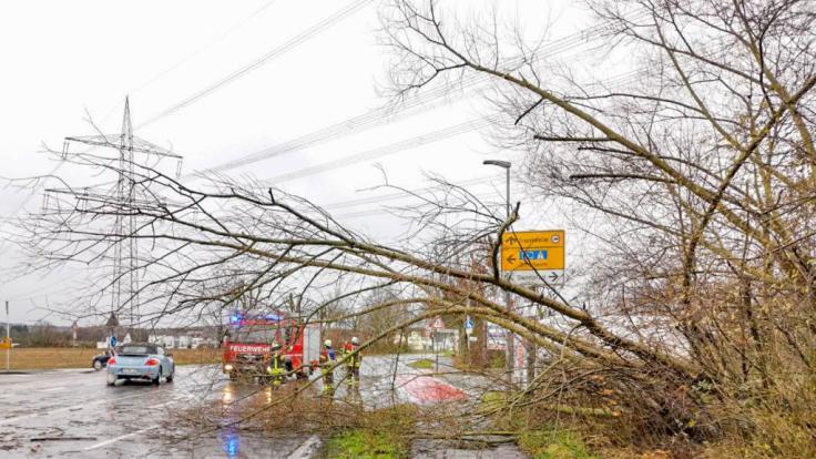 (Symbolbild): Im Saarland wurde eine Frau nach der Sturm-Nacht von einem herabfallenden Ast tödlich verletzt.