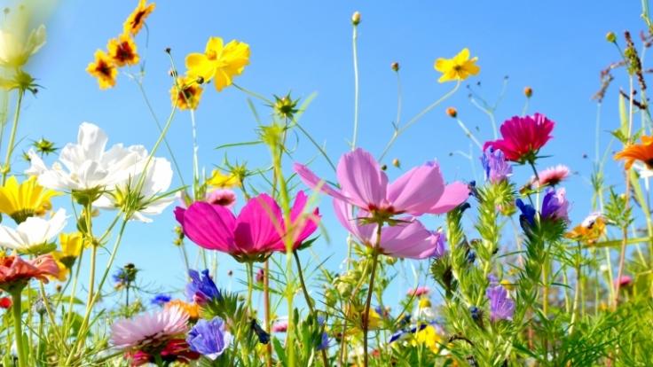 Im Sommer blühen die Gärten in all ihrer Pracht.