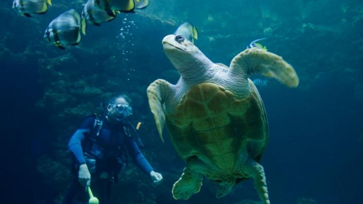 Schildkröten leben seit 220 Millionen Jahren auf der Erde - nun sind sie bedroht. (Foto)