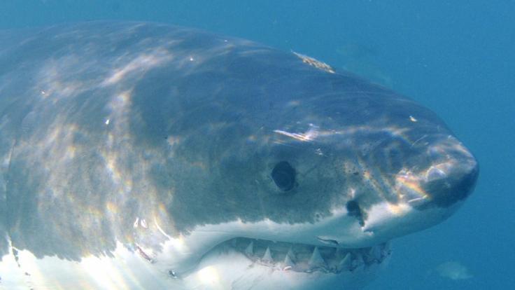 In Australien wurde ein 17-jähriger Surfer von einem Hai totgebissen. (Foto)