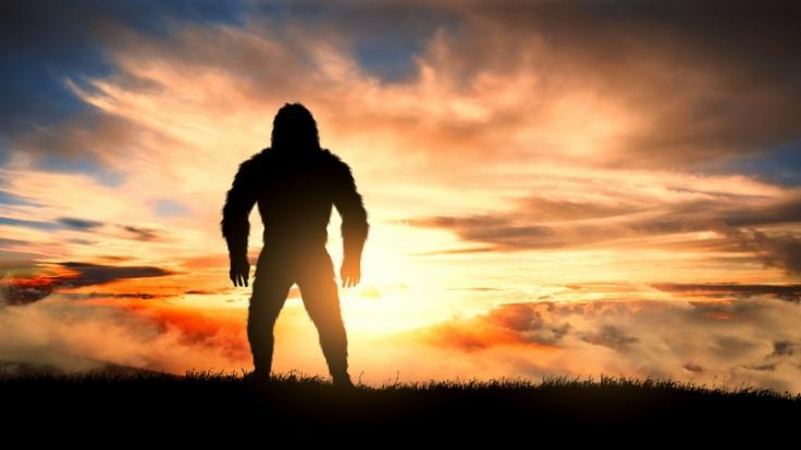Die Frage nach der Existenz des Bigfoot ist auch weiterhin nicht geklärt.