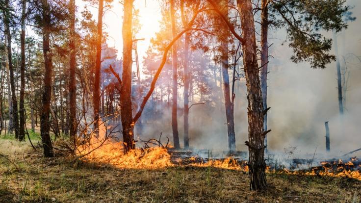 Die Waldbrandgefahr in Deutschland steigt!
