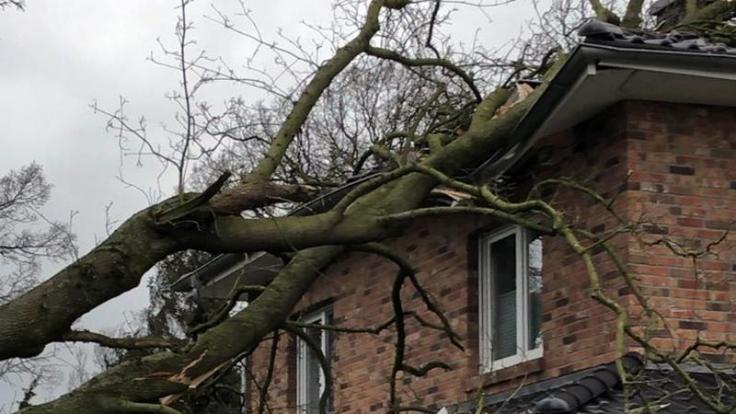 Bei einem Sturm werden Häuser mitunter von umfallenden Bäumen getroffen. Für Schäden kommt in der Regel die Hausrat- und Wohngebäudeversicherung auf. (Foto)