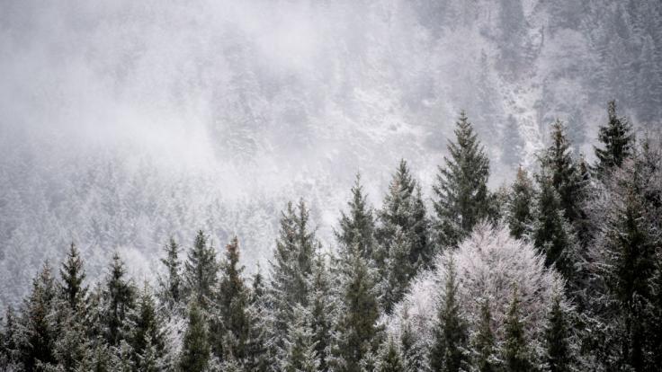 Schneechaos und Lawinengefahr hält Österreich in Atem