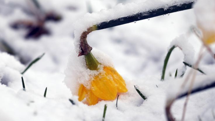 In einigen Regionen des Landes kommt der Winter zurück. (Foto)