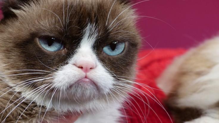 Grumpy Cat ist tot. (Foto)