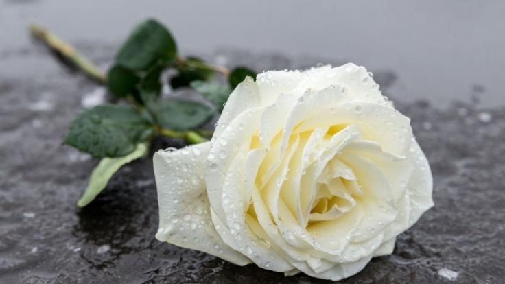 """""""Jeopardy""""-Star Brayden Smith ist mit nur 24 Jahren gestorben. (Foto)"""