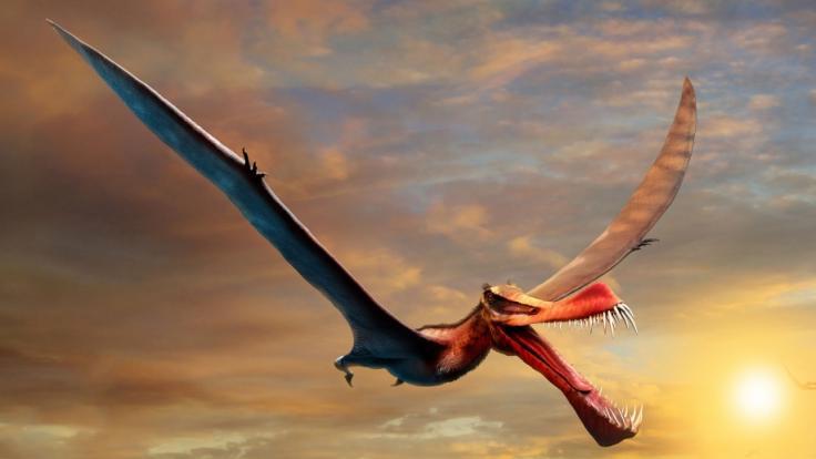 Das Fossil eines Flugdrachen-Dinosauriers wurde jetzt in Chile gefunden. (Foto)