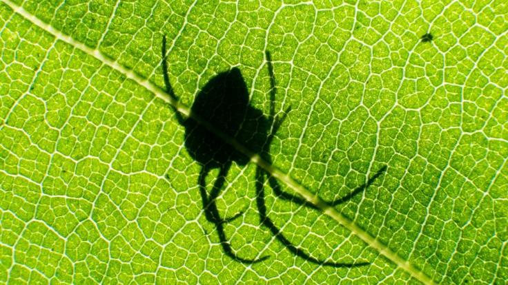 Ein Mann in Österreich hat sein Augenlicht nach einem Spinnenbiss verloren. (Symbolbild) (Foto)