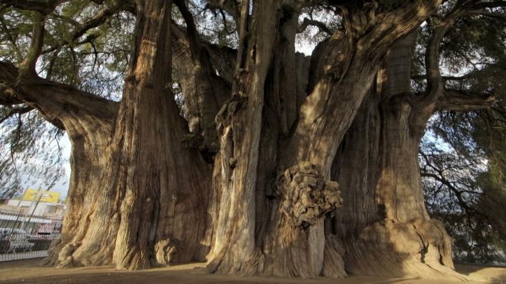 Ein Traum von Baum bei Arte