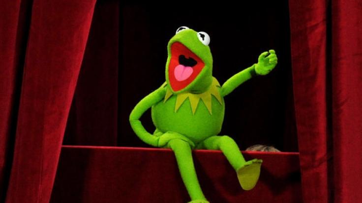 Bei dem australischen Frosch kann sich auch Kermit noch ein Auge holen. (Foto)