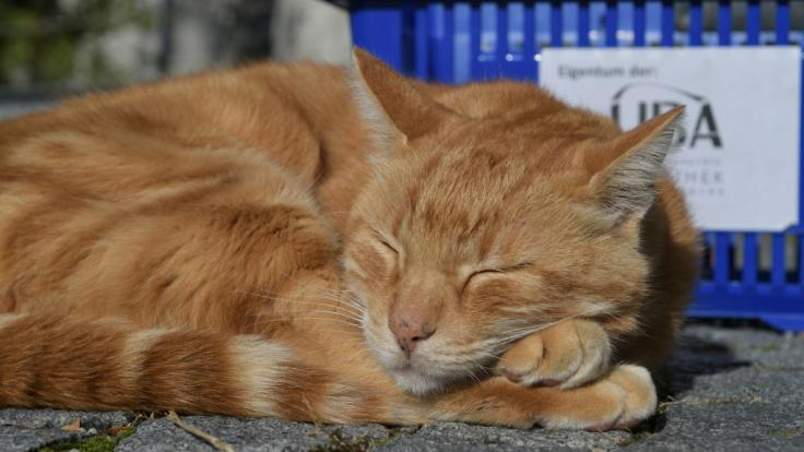Im englischen Nottingham wurde eine Katze schwer missbraucht. (Foto)