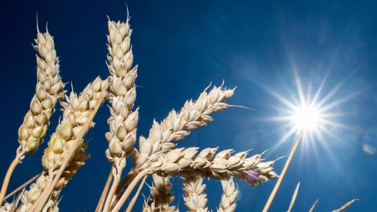 Obwohl das Wetter wechselhafter wird, bleibt Deutschland die Dürre erhalten.