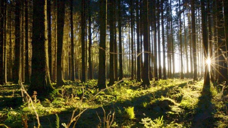 Unsere Wälder bei Arte (Foto)